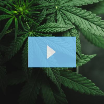 Cannabinoid Remediation & Purification From Hemp by CPC
